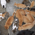 Hoarding Cats