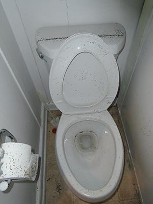 Toilet Flies Cross Contamination
